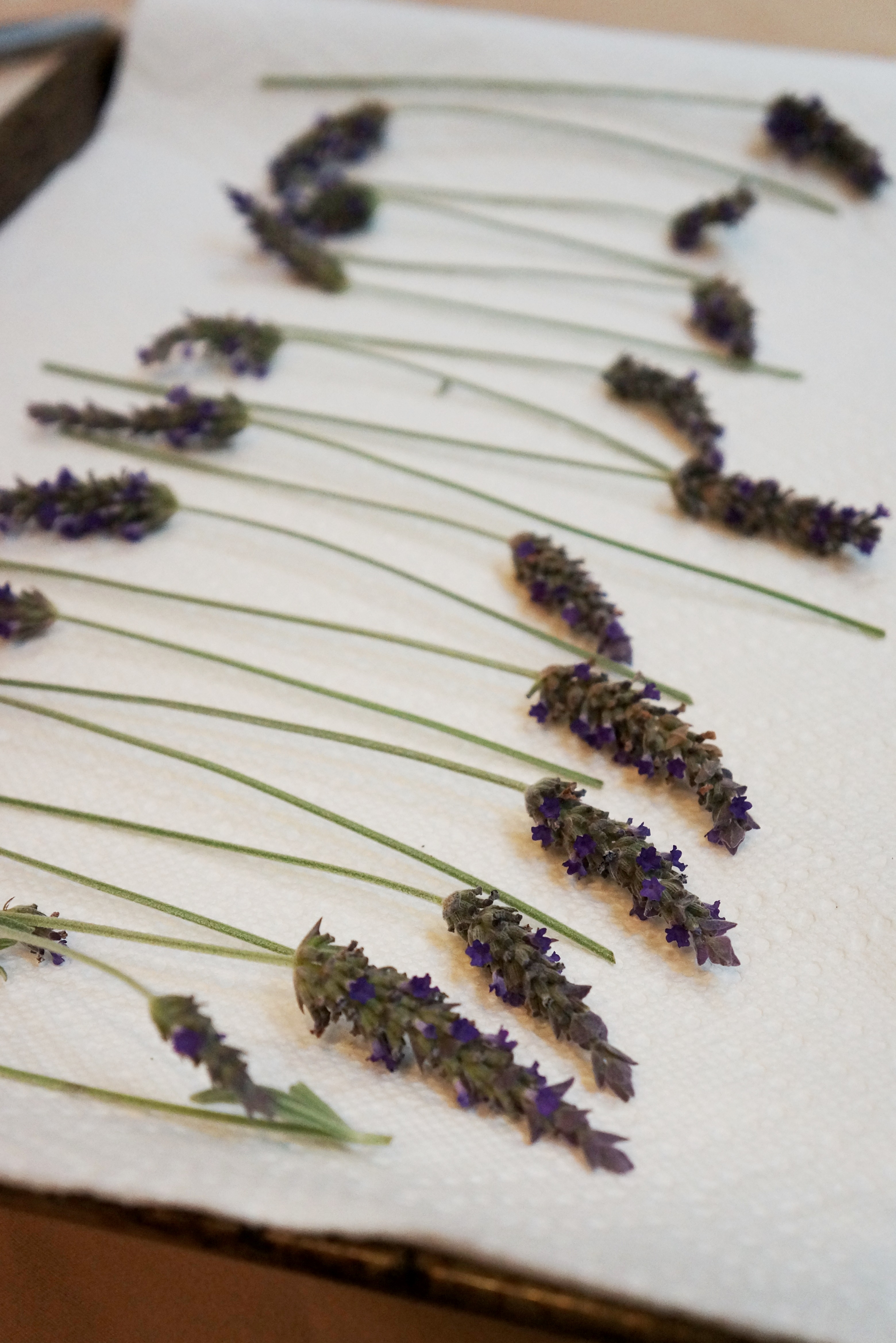 how to make dried culinary lavender